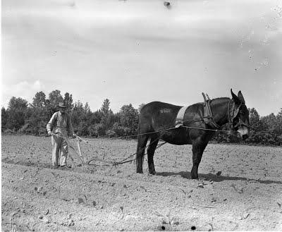 sharecropper